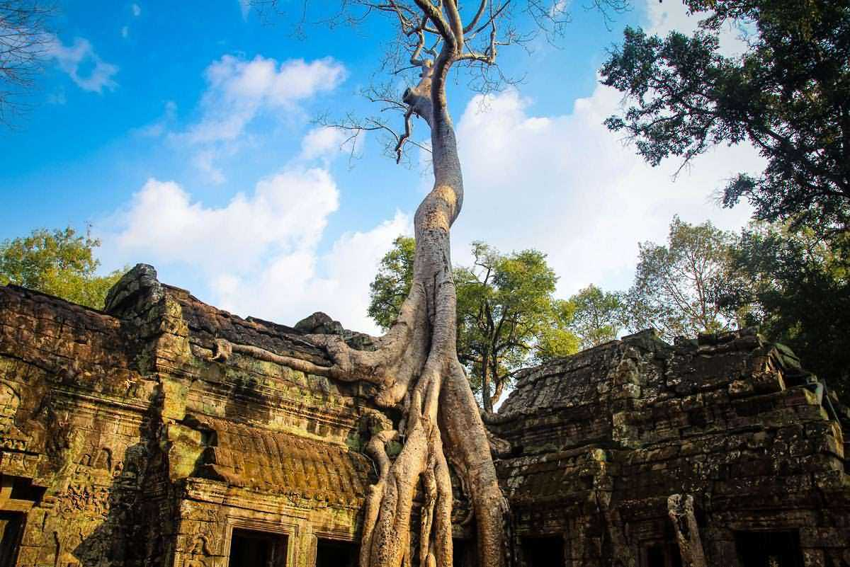 Ta Prohm  sight_id:6030