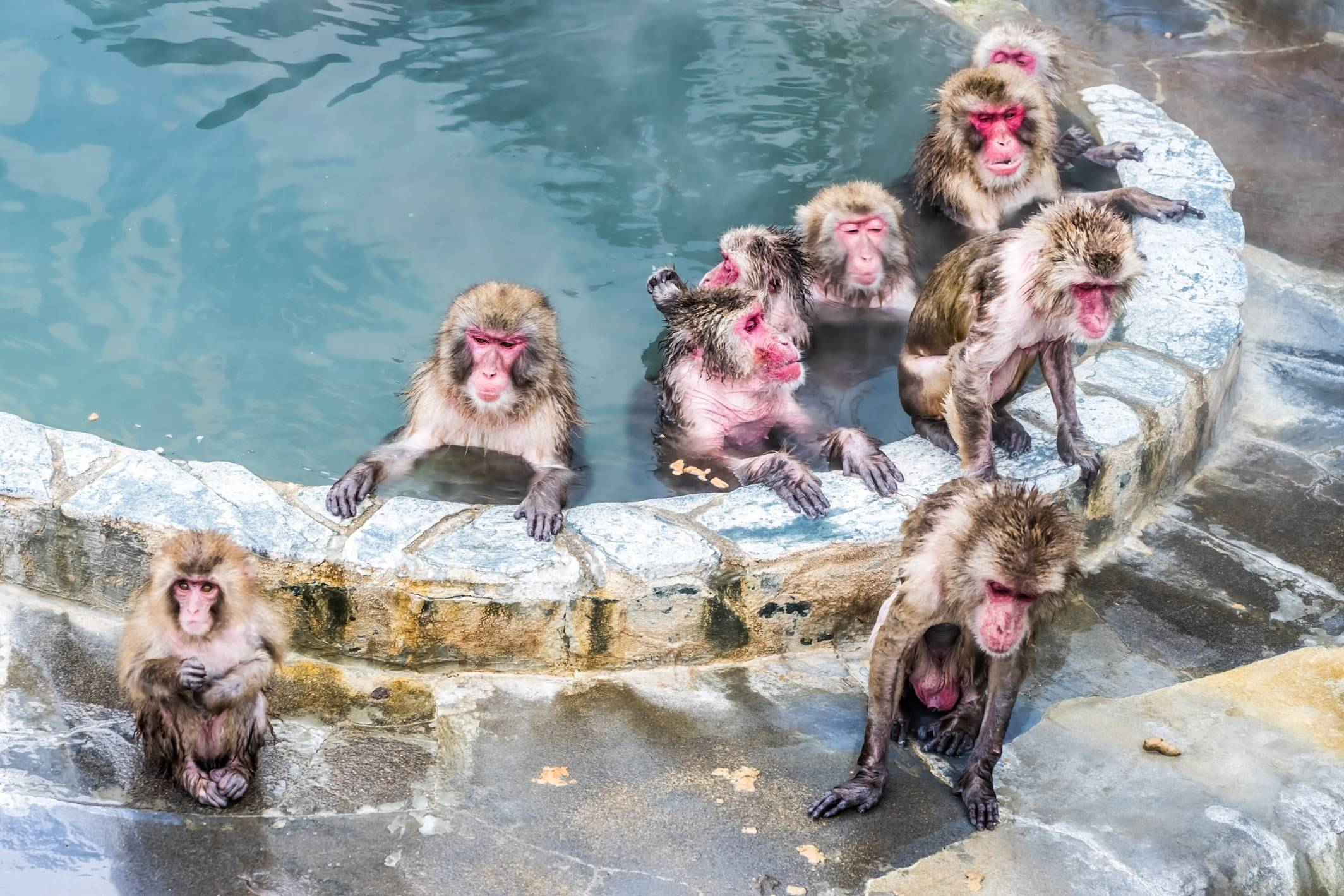 Hakodateshi Nettai Botanical Gardens (Hot-Tubbing Monkeys)