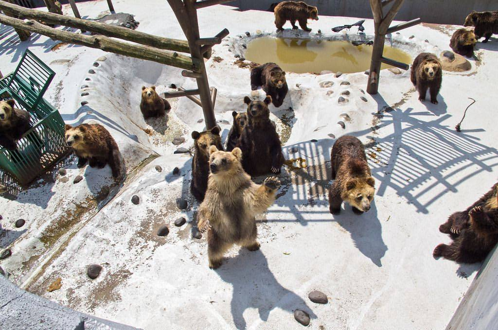 Showa Shinzan Bear Ranch