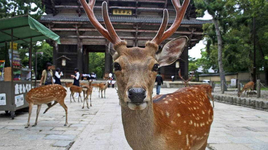 1 Days Japan UNESCO Tours Nara