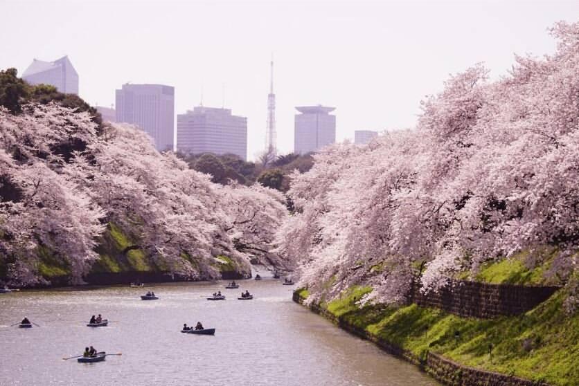 10 Days Japan UNESCO Tours Tokyo Mt.Fuji Hakone Kyoto Nara Osaka