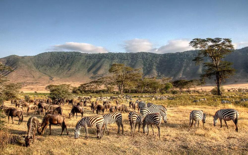 9 days Addis Ababa Kilimanjaro Arusha Ngorongoro Serengeti tour