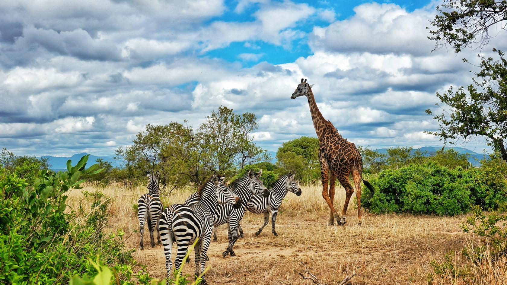 9 days Kilimanjaro Arusha Ngorongoro Serengeti tour