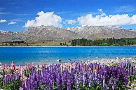 16 days Auckland Queenstown Wanaka Arrowtown Fox Glacier Hokitika Christchurch Lake tekapo Oamaru Dunedin Invercargill Te anau tour