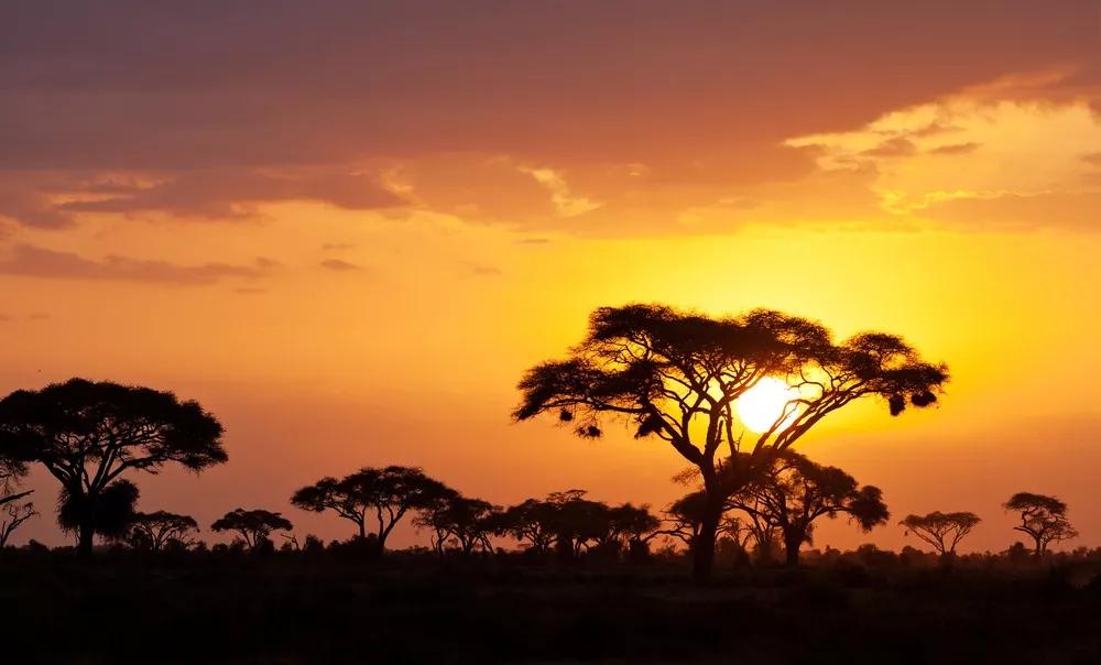 7 days Nairobi Loisaba Maasai Mara tour