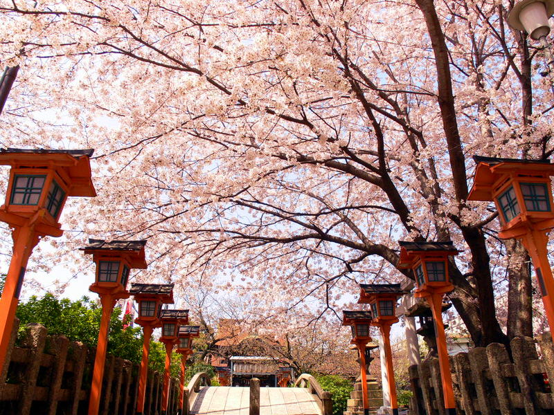 7 Day Tokyo and Kyoto Cherry Blossom Tour