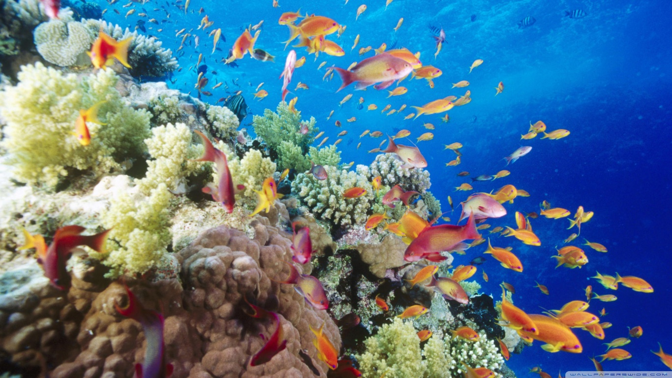 10 Day Sydney, Reef & Rainforest Tours