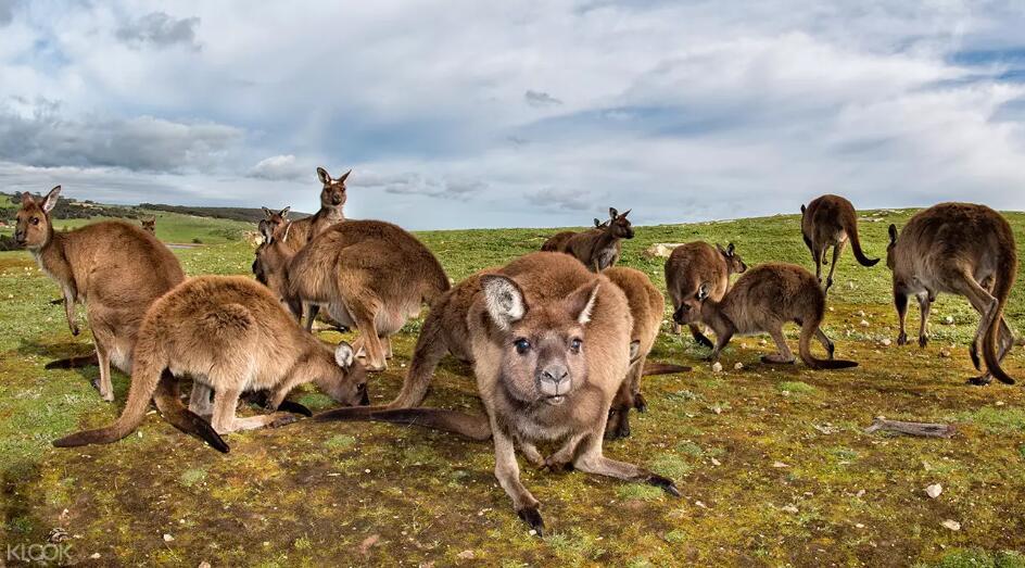 10 Day Tastes of Southern Australia Tours